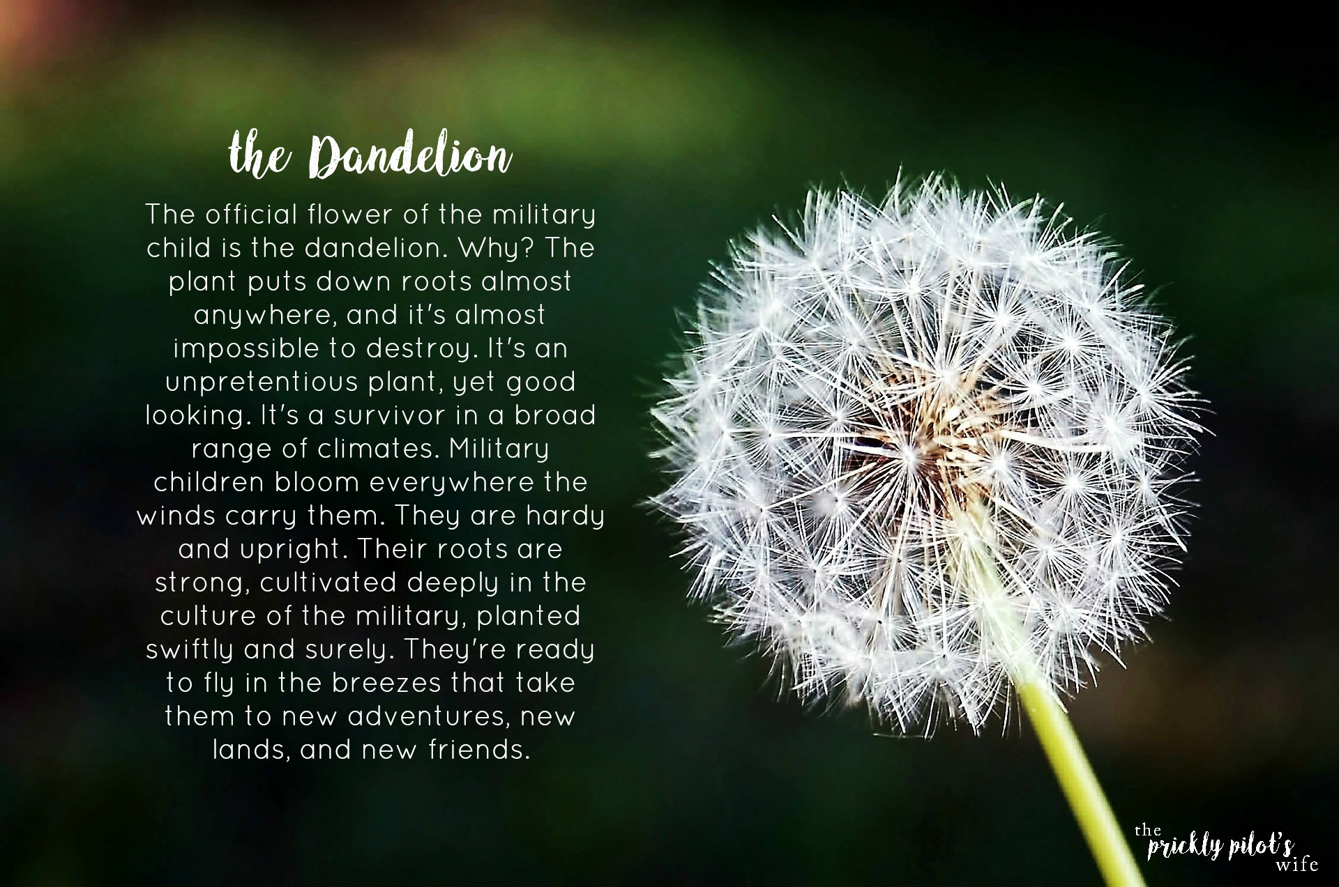 Dandelion Tattoo Designs Meaning